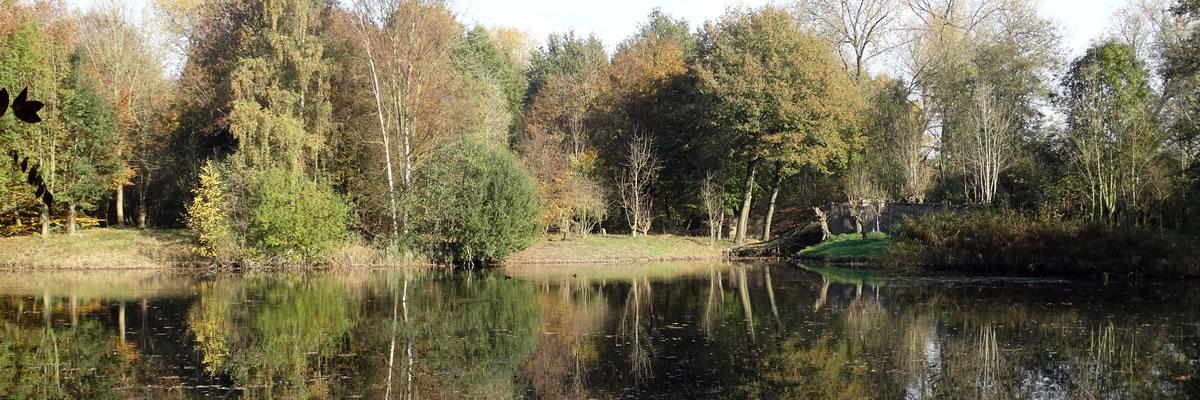 De kooiplas in de herfst